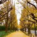 東京リフレッシュ案内 第10話 <br>神宮外苑の銀杏並木